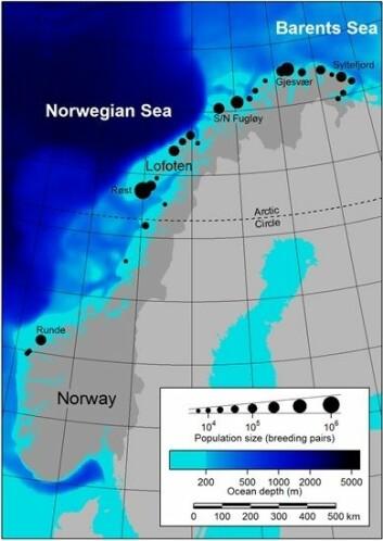 Kartet viser de største norske sjøfuglkoloniene og topografien på sjøbunnen.