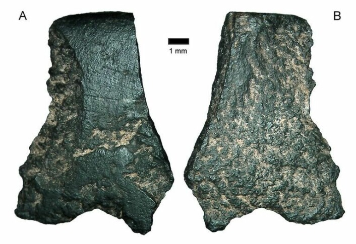 Dette er delene australske arkeologer mener at må ha tilhørt verdens eldste øks funnet til nå. (Foto: ANU)