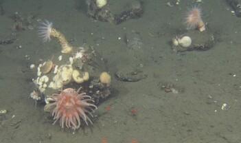 Risikerer vi å kvele havets bunndyr?