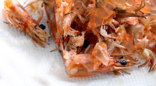 Rester fra fiskeri blir bioplast, kosmetikk og kosttilskudd
