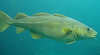 Mindre gamle miljøgifter i fisk fra verdenshavene