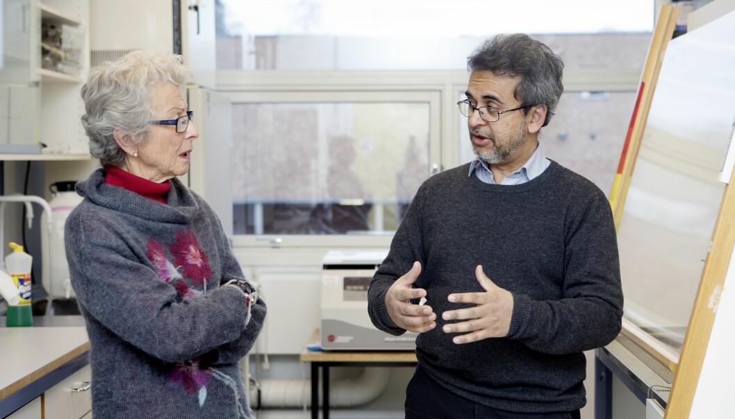– Klarer vi å forutsi demens, har vi kommet et godt stykke på vei, forklarer professor Farrukh Abbas Chaudhry til Sissel Falck-Jørgensen (Foto: Anne Elisabeth Næss)