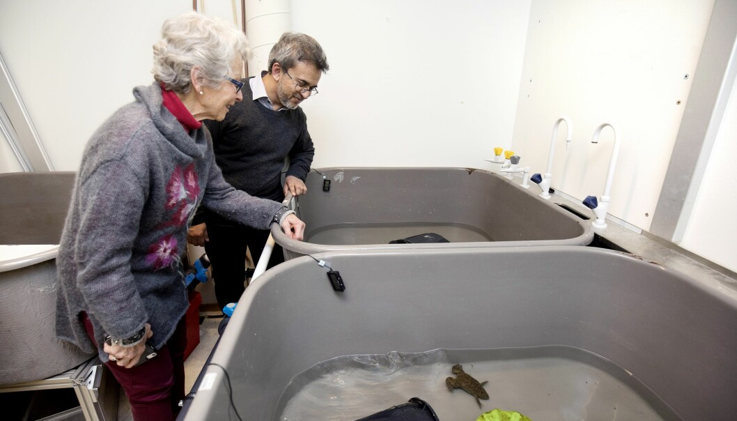 I tillegg til musene har Sissel også fått hilse på forskningsfrosker fra Sør-Afrika med egg som er spesielt egnet til demensforskning. (Foto: Anne Elisabeth Næss)