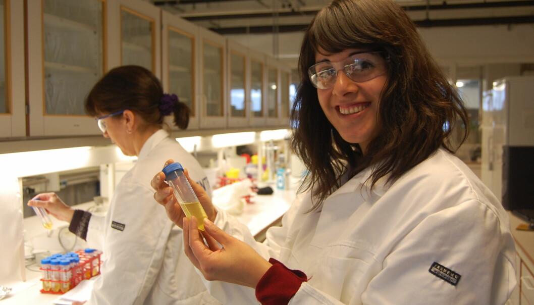 I Trondheim koker de olje av avdankede verpehøns for å utnytte næringsstoffene til lønnsomme kosttilskudd. – Det lukter hønsesuppe, men vi har ennå et stykke frem for å få riktig smak, sier forskningsleder Ana Carvajal ved SINTEF Fiskeri og akvakultur.  (Foto: Anne Lise Stranden, forskning.no)
