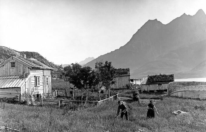 Da hagene fikk gjerder, var det oftest fordi beitende dyr ikke skulle nå inn til planter og blomster. Hagegjerdet til dette småbruket, fotografert i Raftsundet i Nordland i 1884, ser ut til å bestå av gammelt fiskegarn og råvedstenger. (Foto: Axel Lindahl, Norsk folkemuseum)