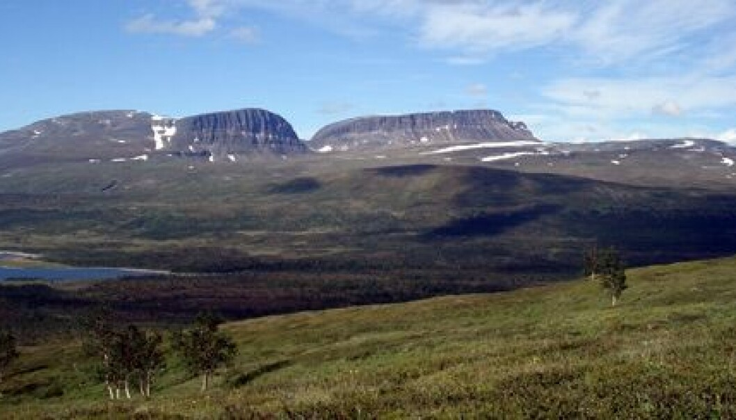 In some areas the tree line is moving south, not north as climate researchers have predicted.  (Photo: Sigrun Aune)