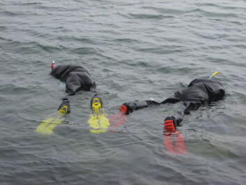Early in the season the water is quite cold, and the researchers wear dry suits to keep warm and dry. (Photo: Trond Amundsen)