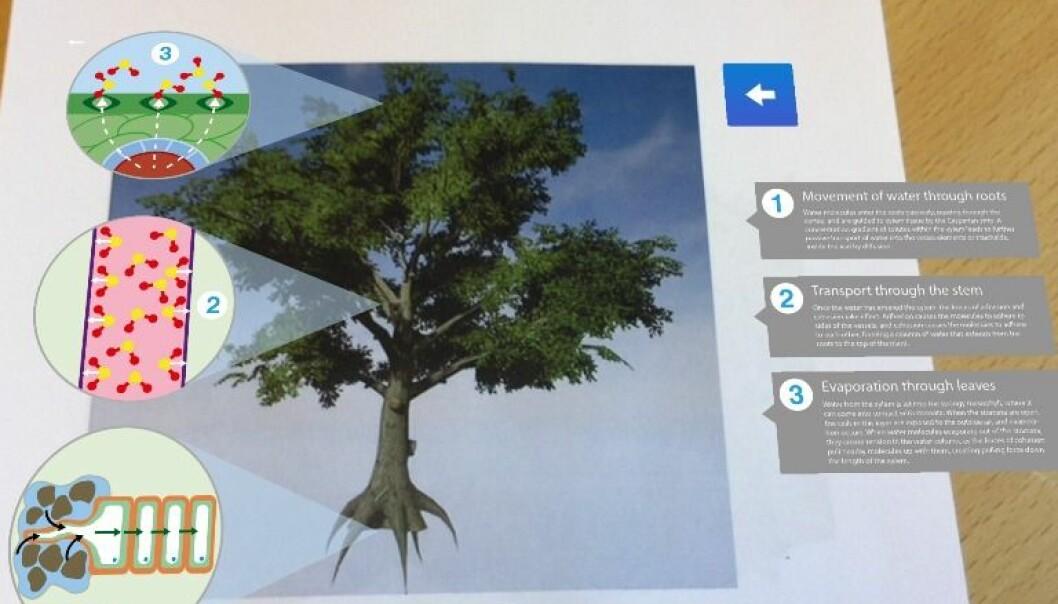 Ved å holde nettbrettet over bildet av treet kommer det fram mer informasjon om treets bestanddeler. (Foto: Kari Aamli)