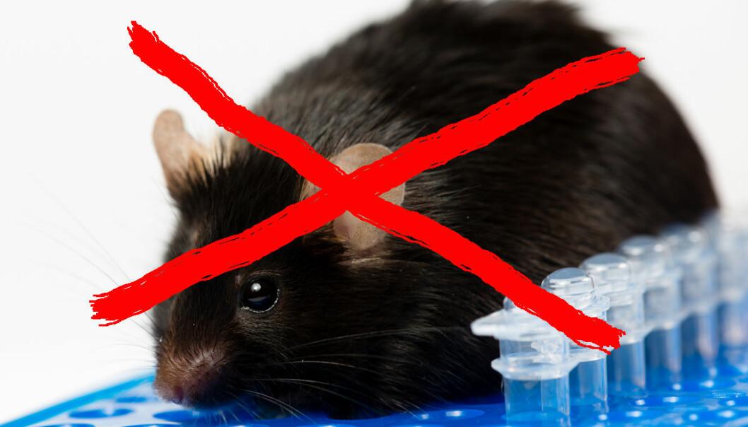En av forskerne hadde fabrikkert data i studien om mus og bakterier.  (Janson George / Shutterstock / NTB scanpix. Bearbeidet av forskning.no)