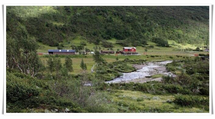 Her er et nytt bilde fra samme sted i Budalen i Trøndelag. Nå er fjellskogen kommet tilbake, selv om det fortsatt er seterdrift på stedet. (Foto: Gunnar Austrheim)