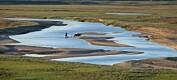 Leter etter urfolksvar på tundraen