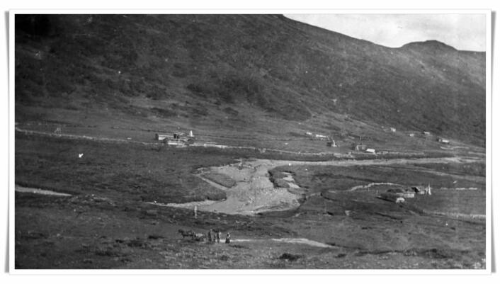 På dette fotoet fra Synnerdalen innerst i Budalen i Trøndelag, ser du hvordan den omfattende nedhuggingen av fjellskogen dramatisk forandret landskapet. Bildet er tatt i 1914. (Foto: Anna Rønning)