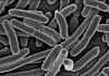 bakterieflora i tarmen