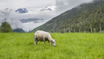Norges fjellandskap er dramatisk forandret