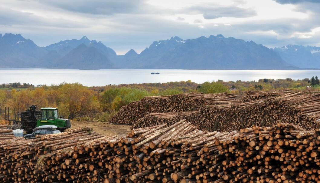 Et bærekraftig skogbruk er et viktig klimatiltak. Skogbruket skal være bærekraftig i den forstand at det ivaretar karbonbeholdningen i skogen, sier skogforsker Gunnhild Søgaard ved Norsk institutt for bioøkonomi.  (Foto: Lars Sandved Dalen, Nibio)