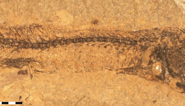 Colour secrets revealed in fossilised fish-eye