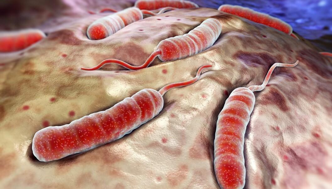 Denne bakterien tar livet av 100 000 mennesker hvert år. (Illustrasjon: Colourbox)