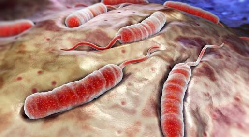 Kolera rammer mennesker med blodtype 0 hardest