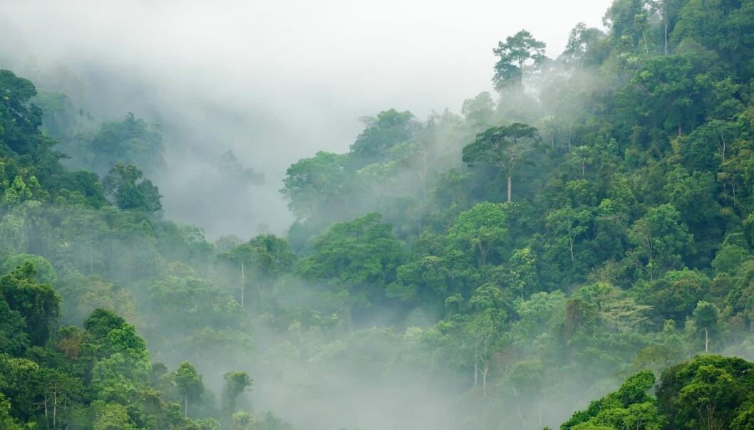 Regnskog i Thailand. Det blir mer av den, ifølge en ny studie. (Illustrasjonsbilde: Shutterstock/NTB Scanpix)