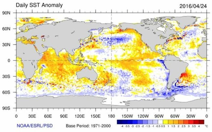 Temperatur (avvik fra normalen) i havoverflaten, estimert for 24 april. (Bilde: NOAA)