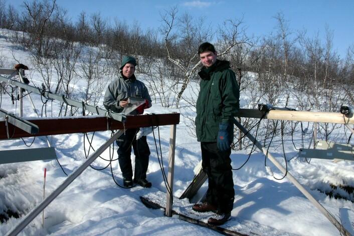 - Vegetasjonen i Arktis blir brunere, sier seniorforsker Jarle W. Bjerke ved Norsk institutt for naturforskning på Framsenteret (til venstre). Her gjør han målinger sammen med Gareth K. Phoenix fra Universitetet i Sheffield. (Foto: Helge M. Markusson)