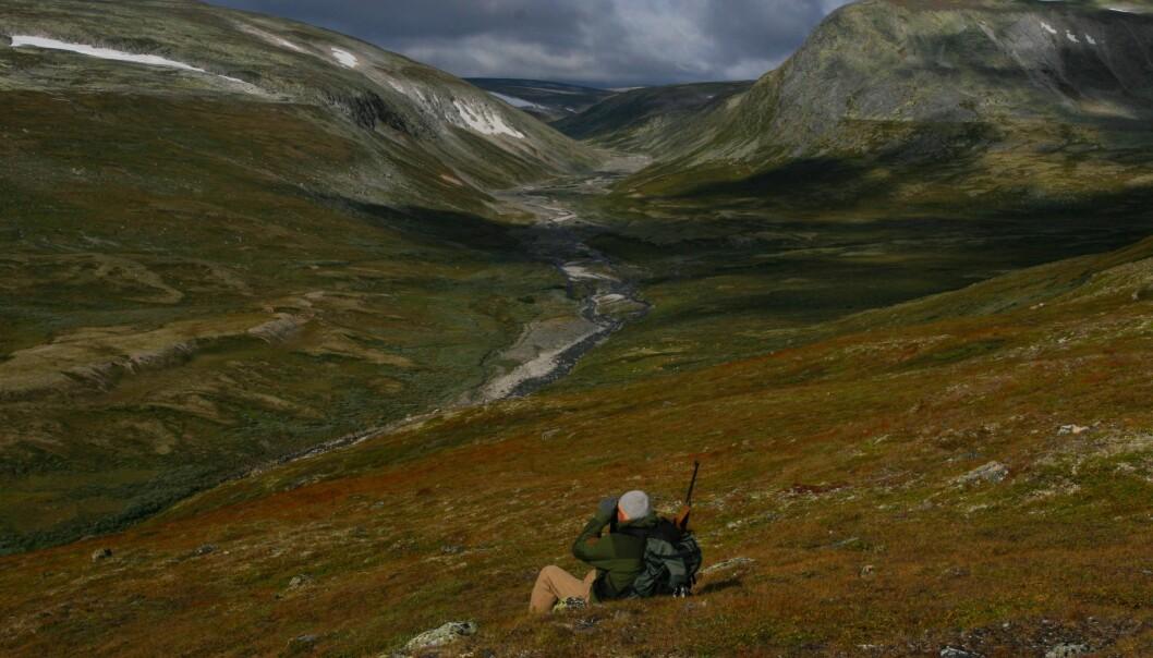A hunter in nature (Photo: Per Jordhøy/NINA)