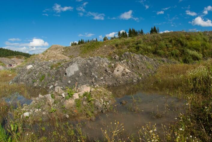 Veibygging og grøfting bidrar til at yngleplasser og overvintringsplasser for storsalamander forsvinner. (Foto: Børre K. Dervo, NINA)