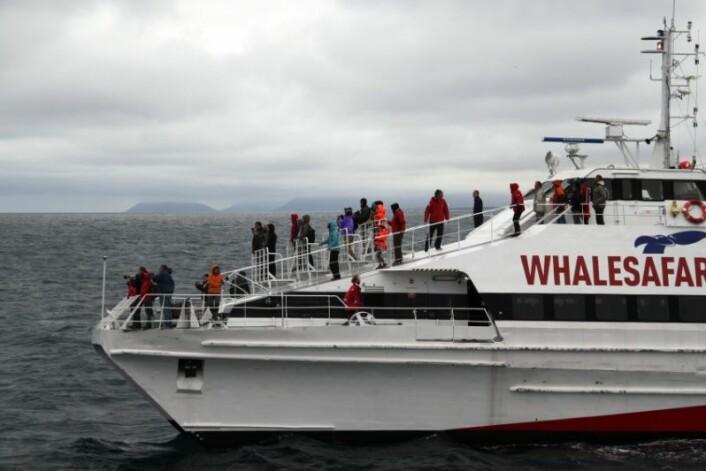De to forskerne har studert hvordan hvalsafari foregår på Island. (Foto: Berit Kristoffersen)