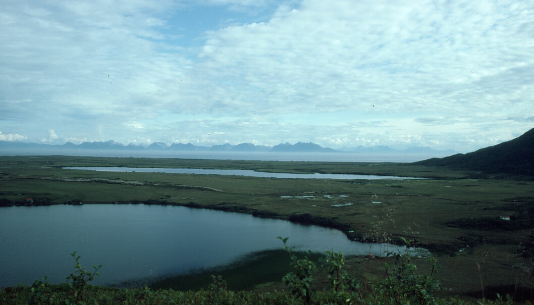 Spruce and pine survived here: Researchers found DNA traces of spruce and pine from the last glacial period in Endletvatn, in Andøya (in the background). Photo: Torbjørn Alm, University of Tromsø. (Photo: Torbjørn Alm, University of Tromsø)