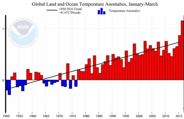 Global temperatur for årets tre første måneder, med tilhørende trend-kurve, for årene 1950-2016, i følge NOAA. (Bilde: NOAA)
