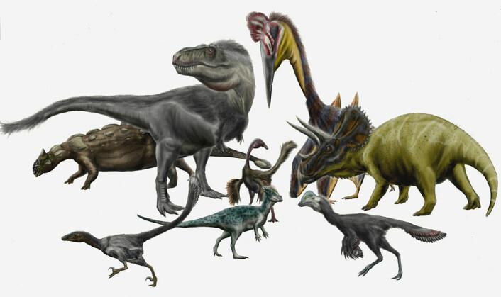 Flere forskjellige dinosaurer, blant annet triceratops som har blitt funnet i Hell Creek-formasjonen i USA. Disse dinosaurene levde i den siste dinosaur-tiden på jorda, og døde ut for 66 millioner år siden. (Foto: (bilde: Durbed/CC BY-SA 3.0))