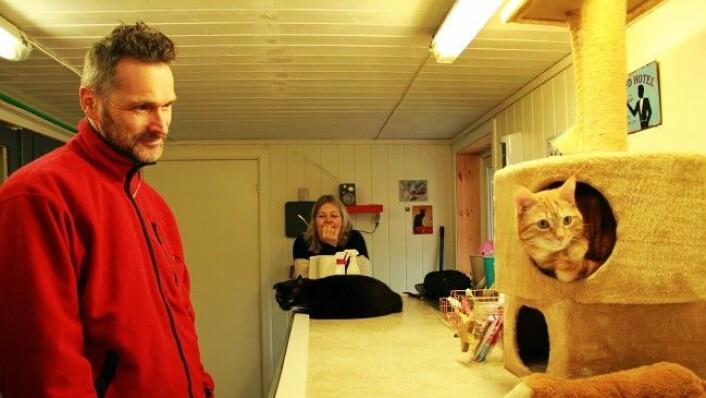 - Det er ofte de samme kattene som kommer tilbake, forteller hotelleierne. I dag skal to av kattene reise hjem til matmor og matfar. (Foto: Mari Svenning.)