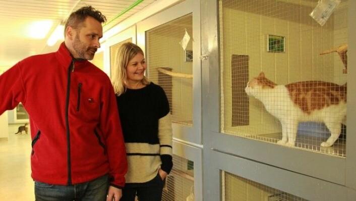 Jo Bjørn og Anne Britt Skatval, har drevet kattehotellet i mange år. Her i prat med katten Chili. (Foto: Mari Svenning.)