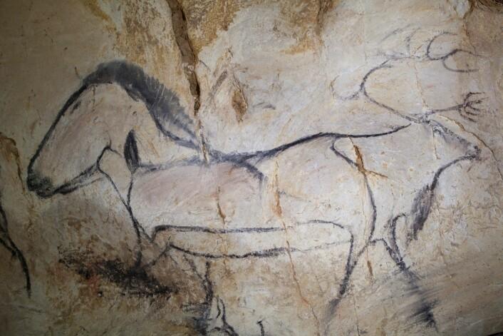 En norsk tilskuer vil lett dra kjensel på villreinen, som må ha vært et attraktivt bytte for steinaldermenneskene i Sør-Frankrike for 36 000 år siden.