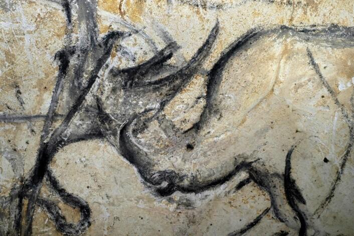 Neshorn i kamp. Andre grotter med hulemalerier har gjerne bilder av hester, kveg og mammuter. I Chauvet-grotten finnes i tillegg bilder av utdøde dyr som huleløve og hulebjørn og hulehyene.