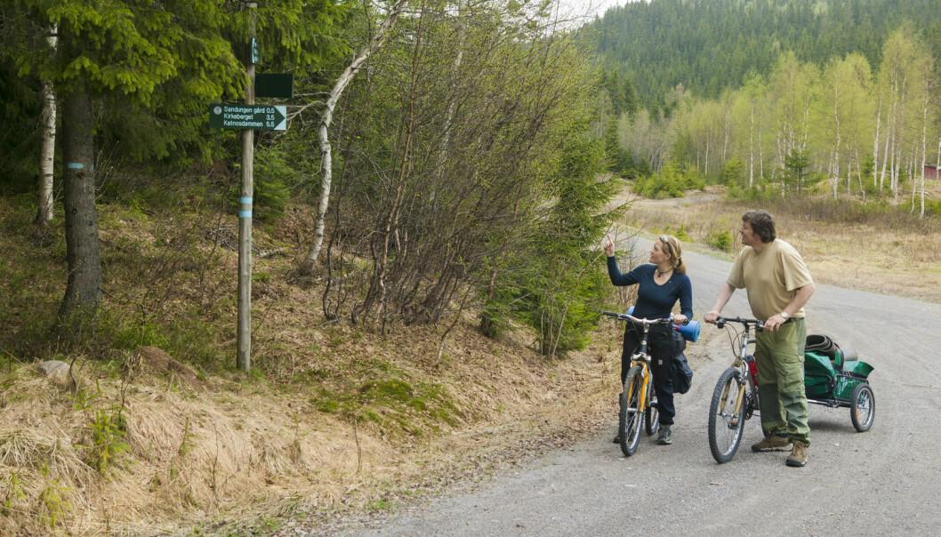 Kan en dasj testosteron bedre kvinners orienteringsevne? Studie ved NTNU viser at det er mer komplisert enn som så. Bildet viser en kvinne og mann som prøver å finne veien på en sykkeltur i Nordmarka i Oslo. (Foto: Kai Jensen, NTB Scanpix)