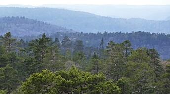 Kronikk: Vi vet for lite om hvordan jorda i skogen påvirker klimaet