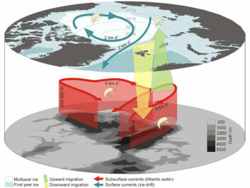 The Nemo hypothesis and conceptual model illustrating the intimate connection between ice-associated fauna and the deep Arctic Ocean currents. By performing deep migrations, organisms not only avoid export out of the Arctic Ocean, they are actively being transported back into areas more likely to freeze early in the winter, and to areas where the expected life-time of the ice is longer. This conceptual model also explain the otherwise unresolved paradox of how the obligate ice-associated fauna were able to survive warmer periods during the Quaternary Period without summer ice in the Arctic. The warm Atlantic current typically flow between 200-900m depth within the Arctic Ocean, pictured only at 250m on the figure. (Model: UNIS)