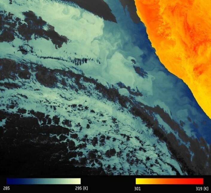 Det første temperatur-bildet fra Sentinel-3A, med store kontraster mellom land og hav i Namibia. Hav og skyer til venstre, land til høyre. (Bilde: Modifisert Copernicus Sentinel data 2016)