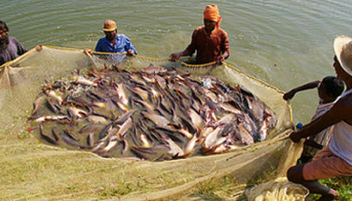 Combating disease in shrimps and carp