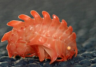 World's toughest organisms live in northern seas