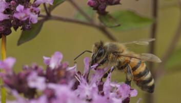 Bier i øst er annerledes enn bier i vest