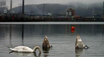 Fjord i Porsgrunn er renere – men tydelige spor av gammel industri