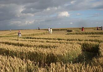 Fields for religious feelings