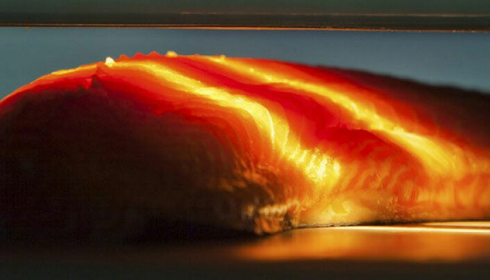 Light can reveal salmon fillet