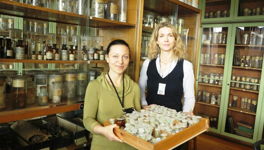Angela Lupattelli (t.v.) og Hedvig Nordeng i Farmasøytisk institutts historiske urtesamling: De har vurdert sikkerheten for 126 urter og påvist at 27 kan skade moren eller fosteret. (Foto: Bjarne Røsjø/UiO)