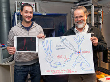The nerve impulses within a synapse can be measured thanks to a microscopic glass pipette. Pedro Mateos-Aparicio (left) and Johan Storm explain how the complex procedure is performed. (Photo: Gunnar F. Lothe, University of Oslo)