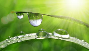 Vannmolekylet har plussladning i den ene enden og minus i den andre. Det kan forklare hvorfor sevjen stiger i stilker og trær, hvorfor blodet kan løse salt og næringsstoffer, hvorfor vannet klumper seg til dråper, hvorfor is fryser til krystaller og hvorfor is flyter på vann.  (Foto: Shutterstock, NTB scanpix)