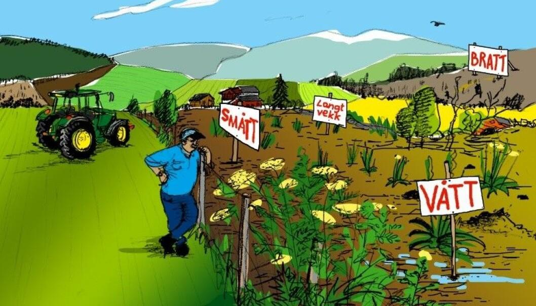 Områdene som gror igjen ofte er små og ligger spredt, men de er allikevel en viktig del av det totale jordbruksarealet i Møre og Romsdal.  (Illustrasjon: Madlen Behrendt / mbdesign.no)