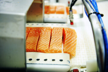 Laksefileter klare for pakking på norsk fabrikk. Jo flinkere produsenter er på å foredle produktet helt frem til forbrukeren, jo mer vil forbrukerne kjøpe. Men det å bevare smaken er viktig, sier Arne Sørvig. (Foto: Tom Haga/Sjømatrådet)